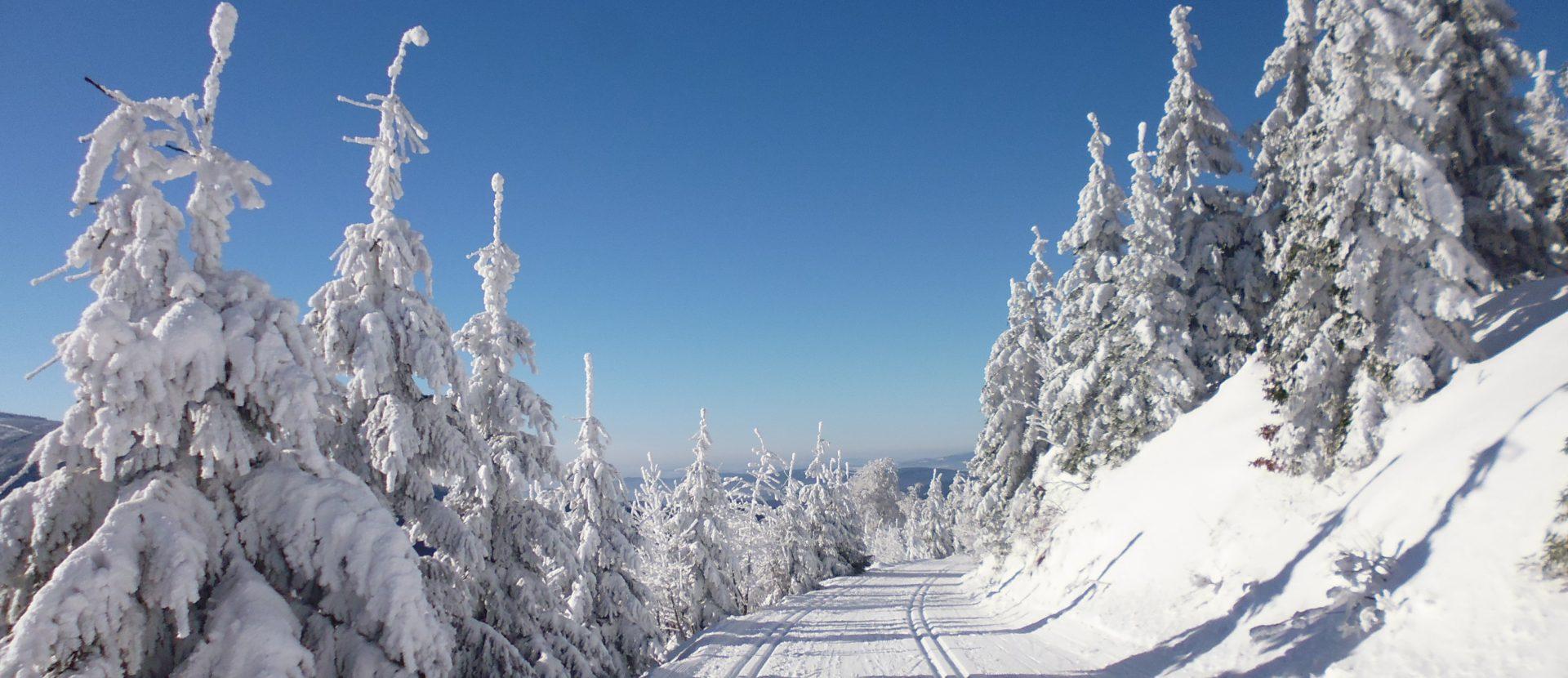 narty biegowe